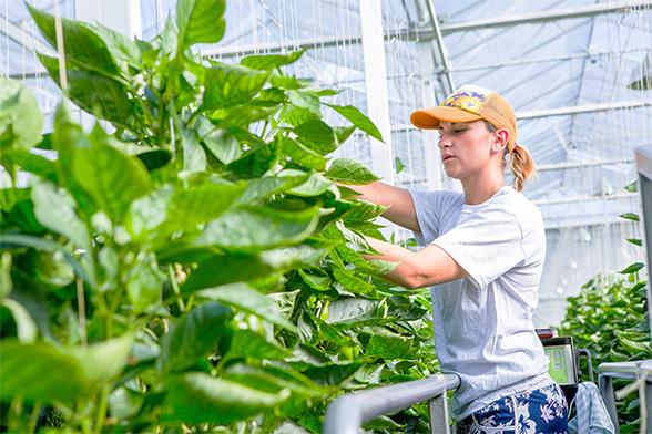 Vrouw aan het werk in de glastuinbouw Kas Groeit